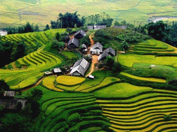 sa-pa-riceterrace-vietnam