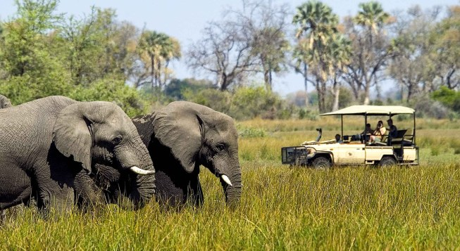 botswana-safari-elephants
