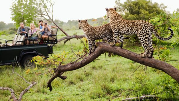 leopard-safari-south-africa-1600x900